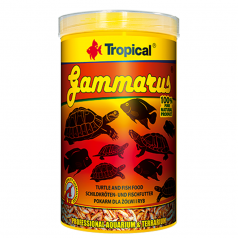Tropical Gammarus